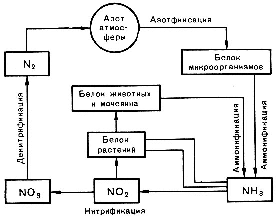 Круговорот азота [1969