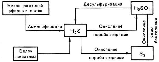 Схема круговорота серы