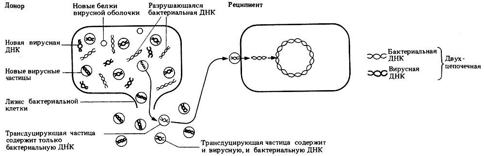 Трансдукция фото