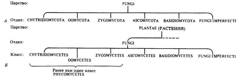Б. Традиционная схема