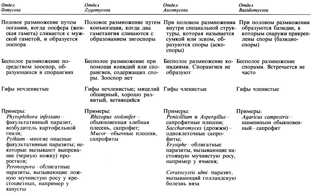 и основные признаки грибов