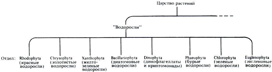 Систематика эукариотических