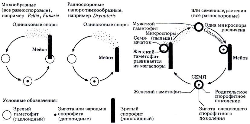 Поколениями у разных групп растений