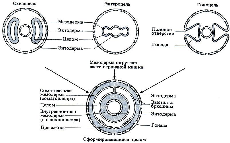 как избавиться от червей паразитов