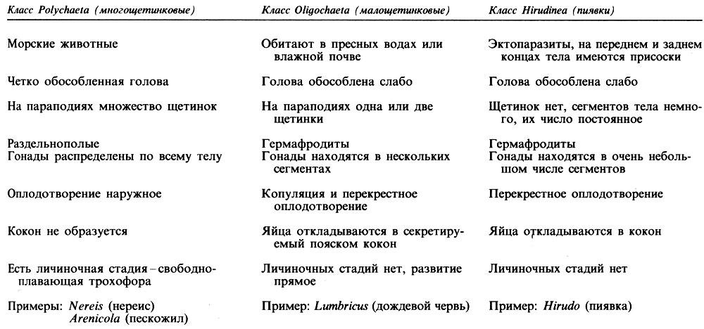 4.8. Тип Annelida (кольчатые черви) [1990 Грин Н., Стаут У ... Классификация Животных Таблица