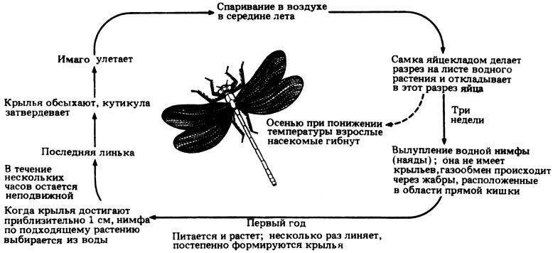 Сергиев посад 792