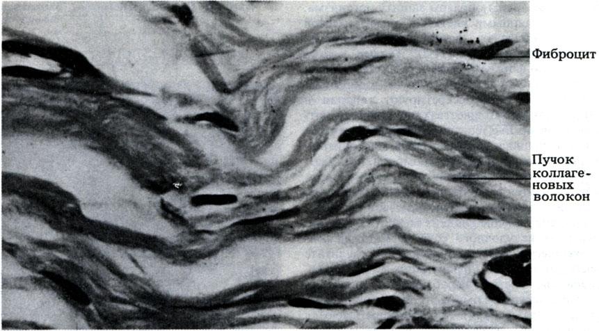 Ткань Ареолярная фото
