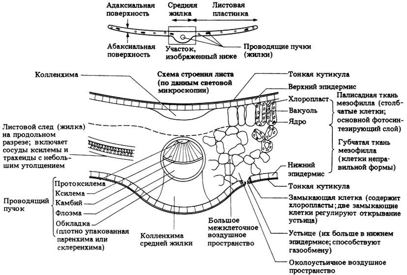 Схема поперечного разреза