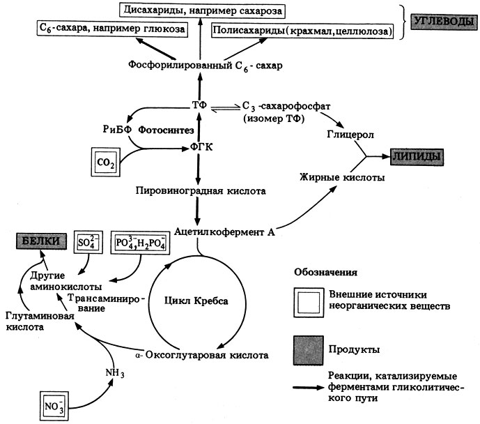 Метаболизм фото