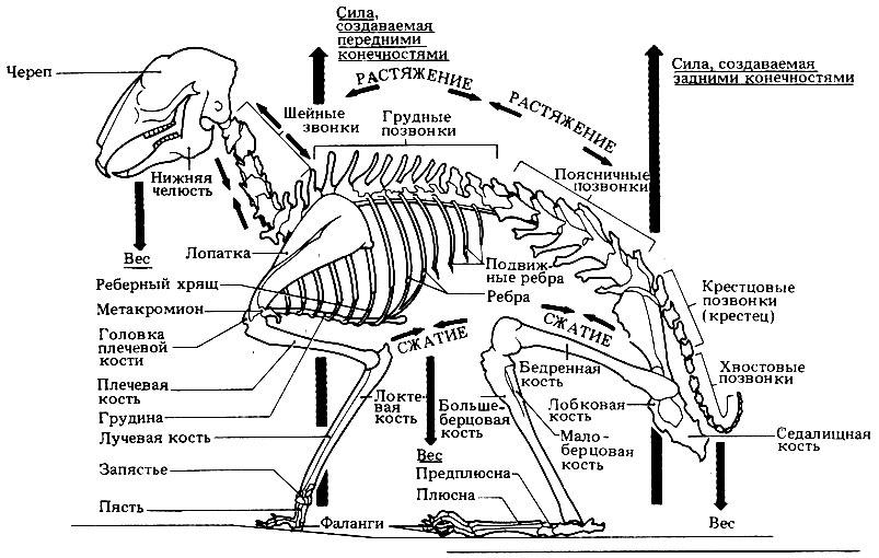 Как сделать кролика из скелета