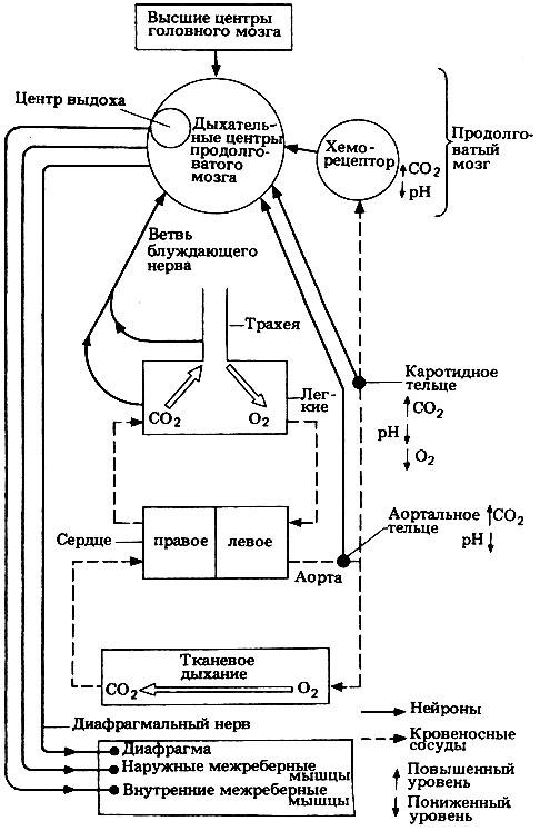 Общая схема механизмов