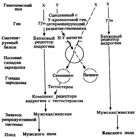Общая схема событий