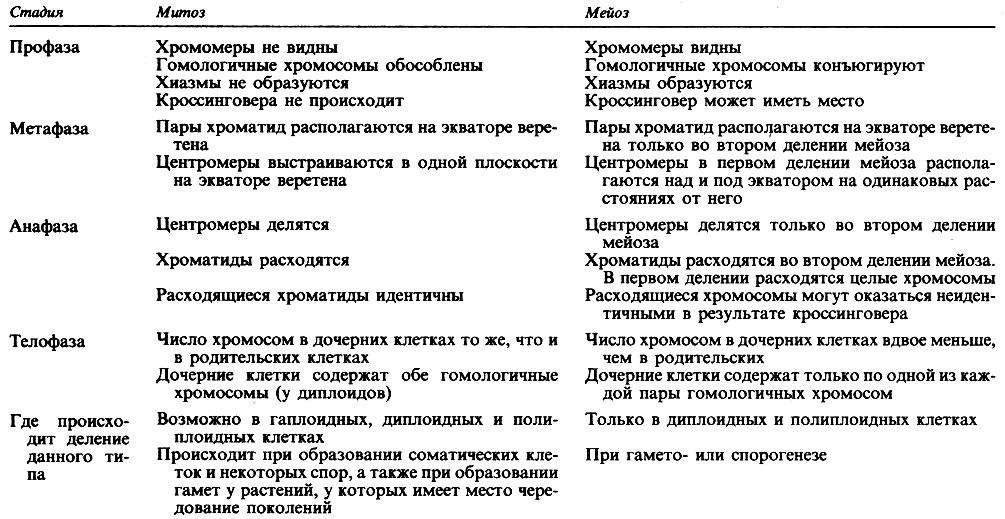 стадиями митоза и мейоза