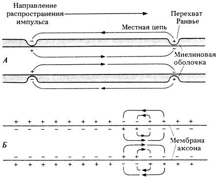 Схема, показывающая разную