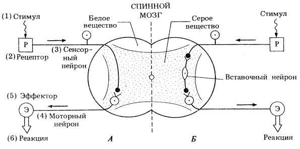Схема двух видов простых