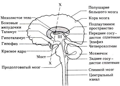 Упрощенная схема строения