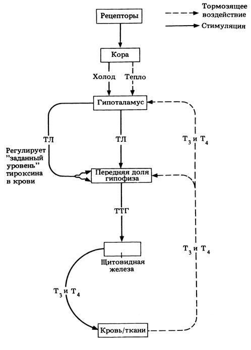 Общая схема взаимодействий