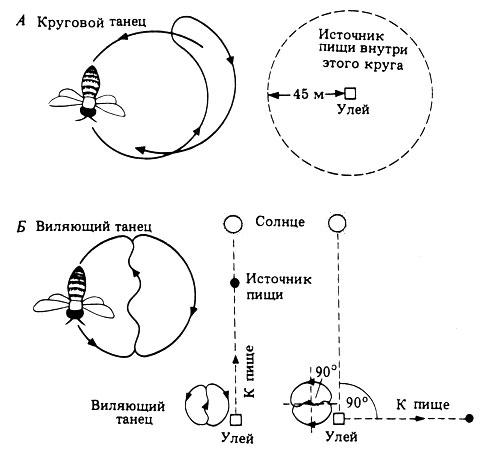 http://biologylib.ru/books/item/f00/s00/z0000018/pic/000421.jpg